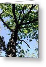 Tree Top Greeting Card