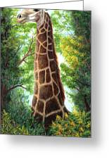 Tree Top Browser Greeting Card