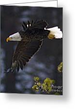 Tree Top Flight-signed Greeting Card