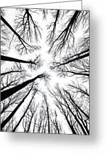 Tree Tops Greeting Card