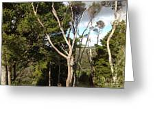 Tree Tops And Beyond Greeting Card