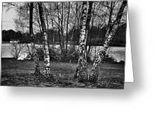 Tree Quartet And The Lake Greeting Card