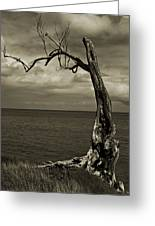 Tree Trunk-1-st Lucia Greeting Card