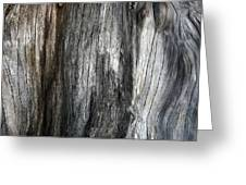 Tree Trunk Abstract Detail Greeting Card