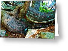 Tree Trunk By Jordan Pond In Acadia National Park-maine Greeting Card