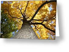 Tree Trunk Greeting Card