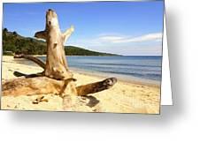 Tree Trunk On Beach Greeting Card