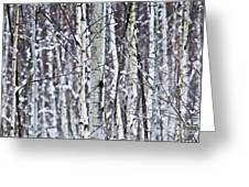 Tree Trunks Covered With Snow In Winter Greeting Card