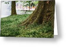Tree Trunks In Spring Greeting Card