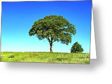 Tree Two One... Greeting Card