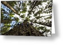 Tree Walkers Greeting Card
