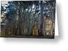 Tree Wall Greeting Card