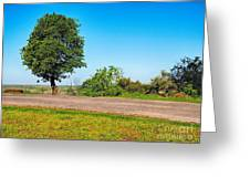 Tree With A View Greeting Card
