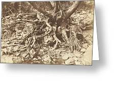 Tree With Tangle Of Roots Greeting Card