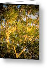Tree With V Shaped Branches Greeting Card