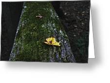 Tree With Yellow Leaf Greeting Card