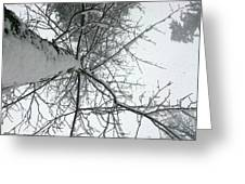 Tree Wrapped In Snow Greeting Card
