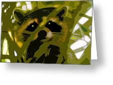 Treed Raccoon Greeting Card