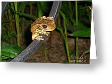 Treefrog Greeting Card