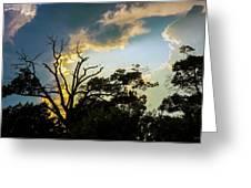 Treeline Silhouette Greeting Card