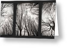 Treeology Greeting Card