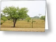 Trees 011 Greeting Card