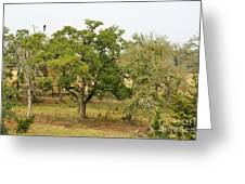 Trees 016 Greeting Card