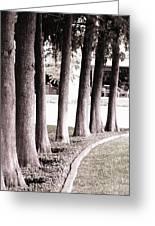 Trees 2 Greeting Card