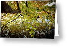 Trees 9684 Greeting Card