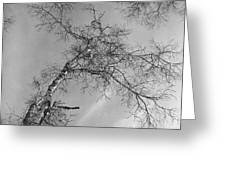 Trees Against Winter Greeting Card by Arni Katz