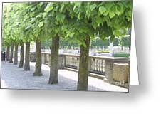 Trees All In A Row Greeting Card