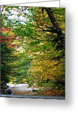 Trees Along The Flumes Trail Greeting Card