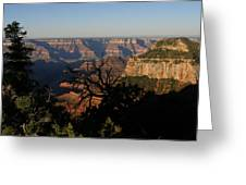 Trees And Canyon Greeting Card