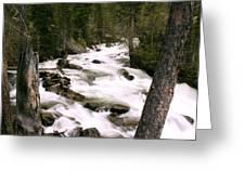 Trees And Falls Greeting Card