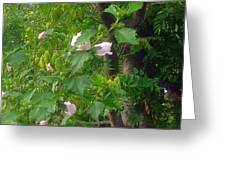Trees And Hibiscus Bush Merge Greeting Card