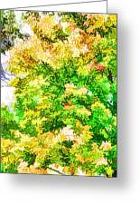 Trees And Leaves  Greeting Card