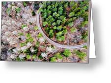 Trees And Path From Above Drone Photography Greeting Card