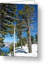 Trees And Snag At Crater Lake Greeting Card