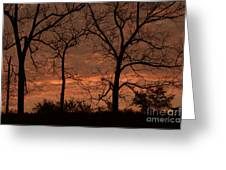 Trees And Sunrise Greeting Card