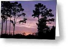 Trees And Sunset Greeting Card