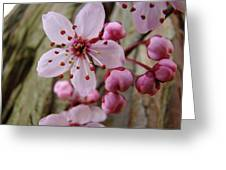 Trees Art Prints Canvas Pink Blossoms Spring Blue Sky Baslee Troutman Greeting Card