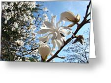 Trees Art Prints White Magnolia Flowers Baslee Troutman Greeting Card