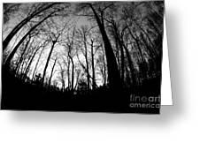 Trees At Dusk Greeting Card