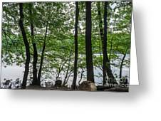 Trees At Lake Schlachtensee Greeting Card