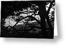 Trees Black And White - San Salvador Greeting Card