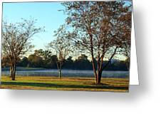 Trees By The Water Greeting Card