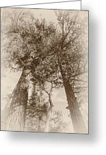 Trees Colliding Greeting Card