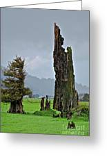 Trees Come In All Shapes And Sizes Greeting Card