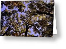 Trees Conversing Greeting Card