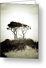 Trees Extreme Greeting Card